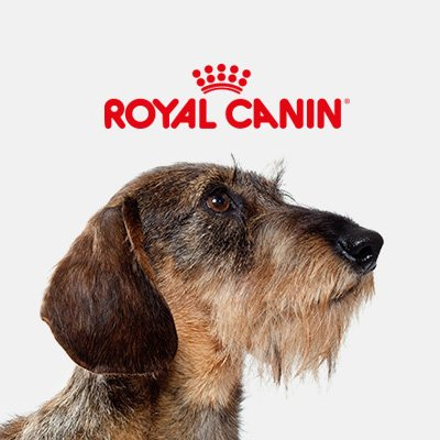photo chien logo Royal Canin