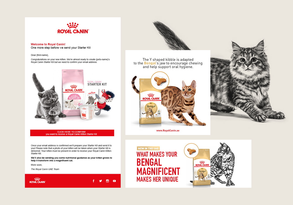 newsletter chat Royal Canin