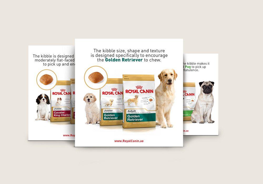 Visuels pour réseaux sociaux alimentation chien de race Saint Vincent Group SVG