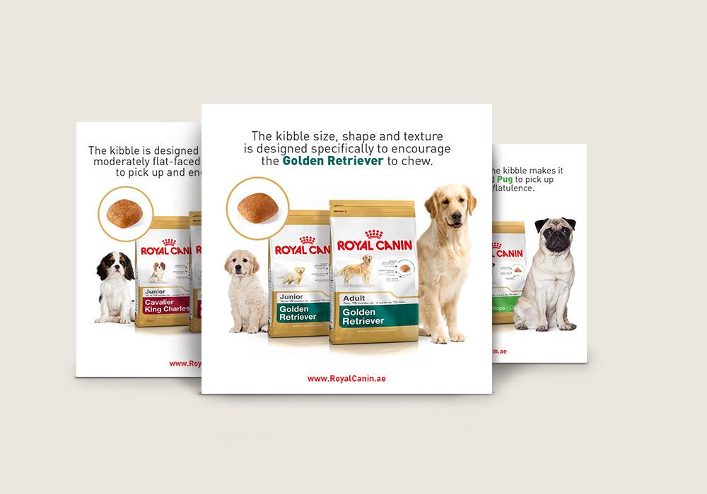 visuels pour réseaux sociaux informations nourriture pour chien de race Royal Canin