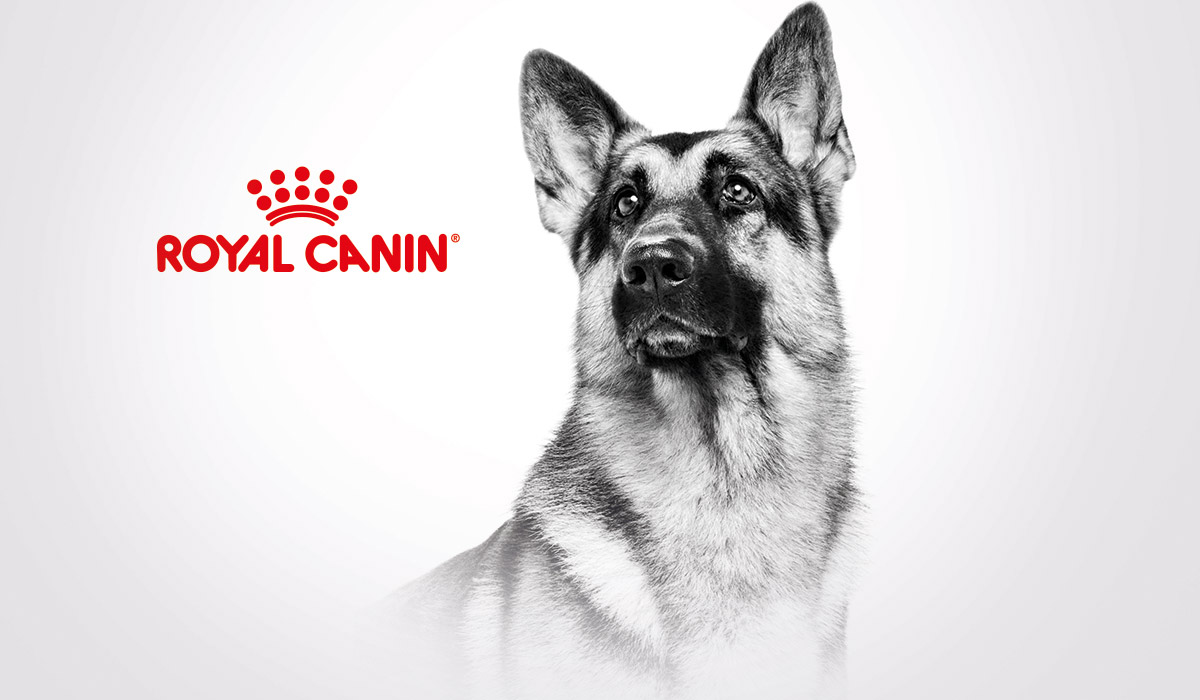 Slide Communication Chien Royal Canin